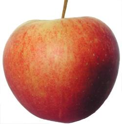 Apples Royal Gala - each