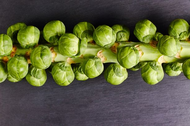Sprout Stalk - Locally grown in Braunton