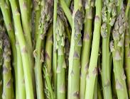 Braunton Asparagus