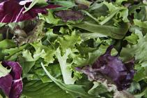 Baby Leaf Lettuce - 125g