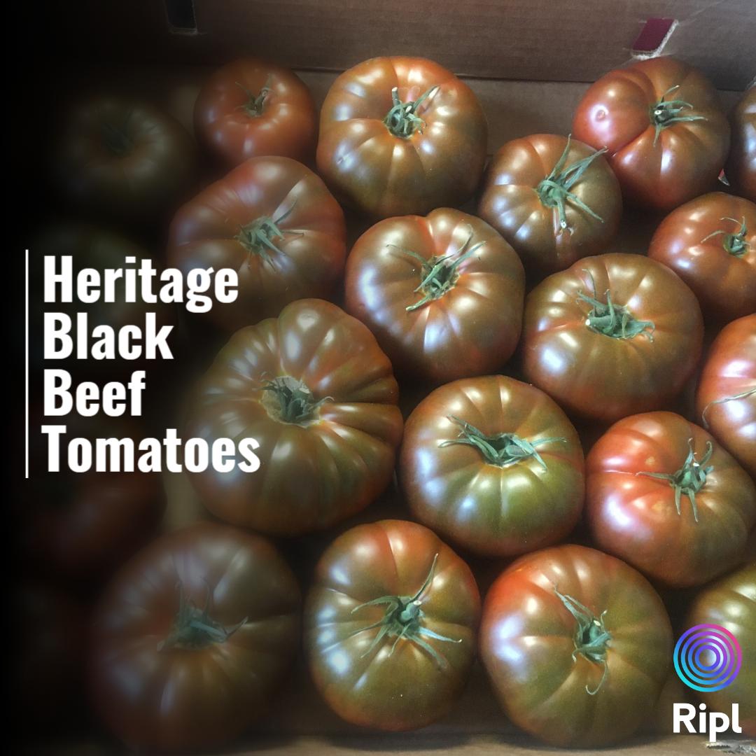 Heritage Black Beef Tomatoes