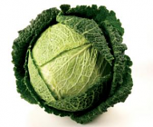 Cabbage - Savoy - Extra large
