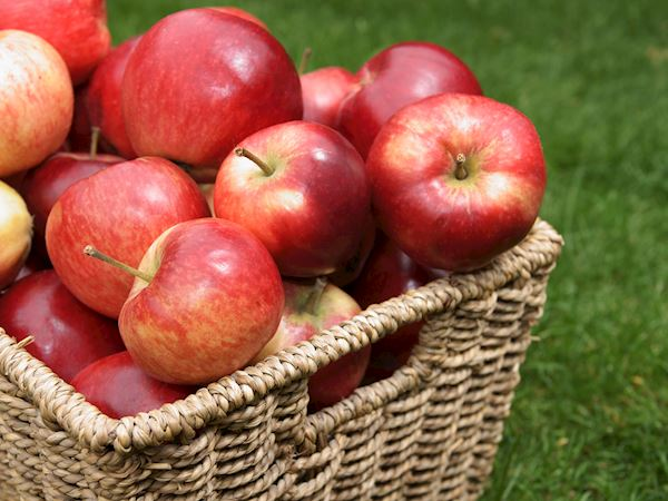 English Discovery Apples - 500g