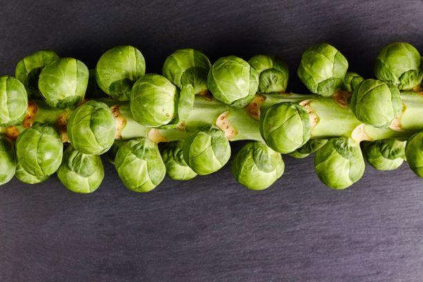 Sprout Stalk - Locally grown in Braunton
