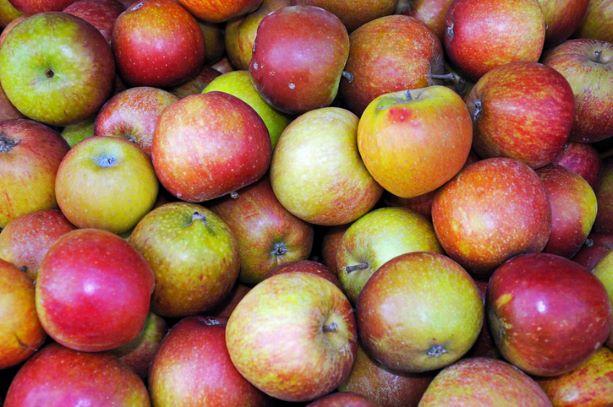 Apples - Cox's