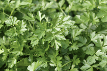 Parsley Flat Leaf (100g)