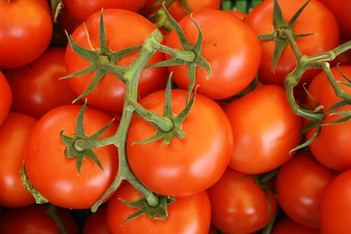 Vine Tomato - a bunch